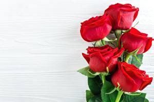 Tapety na pulpit Z bliska Róża Szablon karty z pozdrowieniami Kwiaty