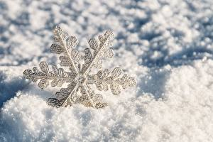 Bilder Hautnah Schneeflocken Schnee