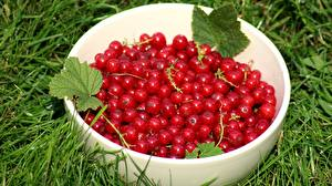 Pictures Currant Berry Bowl Red