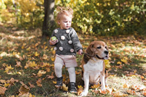 Image Dog Autumn Bokeh Little girls Beagle child Animals