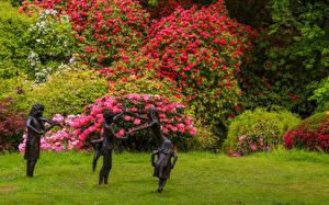 Fotos England Garten Rhododendren Skulpturen Strauch Ramster Gardens Surrey Natur