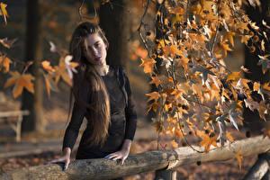 Fotos Ast Blatt Hand Kleid Haar Starren Braune Haare Federica