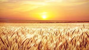 Bilder Acker Morgendämmerung und Sonnenuntergang Horizont Ähren Sonne