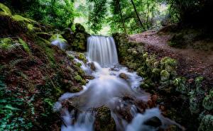Fotos Wald Fluss Wasserfall Stein Irland Laubmoose Tipperary Natur