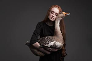 Fotos Gänse Rotschopf Grauer Hintergrund Anna Zhu, Kirill Sokolov Tiere Mädchens
