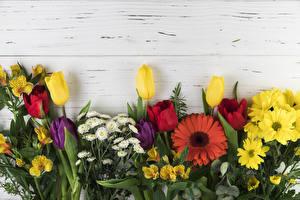 Hintergrundbilder Gerbera Chrysanthemen Alstroemeria Tulpen Bretter