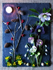 Wallpaper Hellebore Snowdrops Snails Berry Moon Branches Conifer cone flower