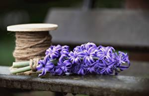 Bilder Hyazinthen Bokeh Violett Blüte