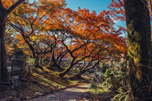 Hintergrundbilder Japan Kyōto Park Herbst Bäume Blattwerk Baumstamm Laubmoose Maruyama Park