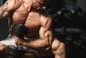 Bilder Mann Bodybuilding Muskeln Hand Hanteln sportliches