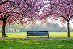 Images Park Flowering trees Trees Grass Bench Nature