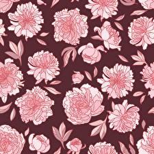 Fotos Pfingstrosen Textur Gezeichnet Blüte