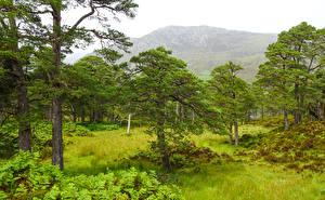 Bakgrunnsbilder Skottland Fjell Trær Gress Achagate