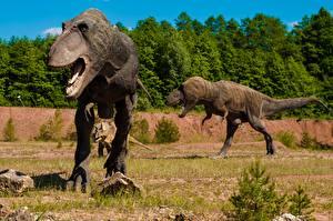 Images Sculptures Tyrannosaurus rex Dinosaurs Grass Animals