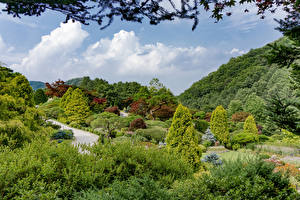 Fotos Südkorea Seoul Parks Strauch Bäume