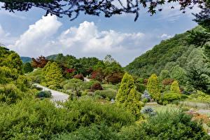 Sfondi desktop Corea del Sud Seul Parchi Cespugli Alberi Natura
