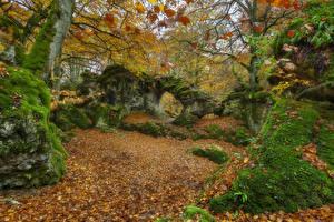 Hintergrundbilder Spanien Herbst Parks Steine Laubmoose Blattwerk Bäume Opakua Agurain