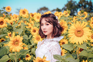 Picture Helianthus Asiatic Fields Blurred background Brown haired Glance young woman Flowers