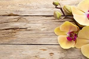 Fotos Tulpen Bretter Vorlage Grußkarte