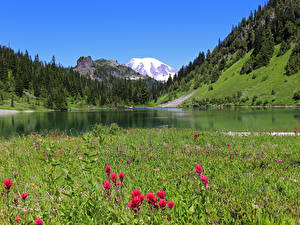 デスクトップの壁紙、、アメリカ合衆国、山、湖、森林、ワシントン、草、Gifford Pinchot National Forest、
