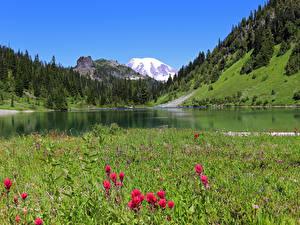 桌面壁纸,,美国,山,湖泊,森林,华盛顿,草,Gifford Pinchot National Forest,