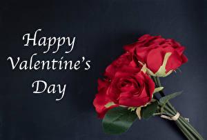 Hintergrundbilder Valentinstag Rose Blumensträuße Grauer Hintergrund Englischer Text Rot Blüte