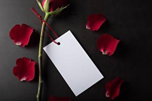 Bilder Valentinstag Rosen Grauer Hintergrund Vorlage Grußkarte Kronblätter Bordeauxrot Blatt Papier Blumen