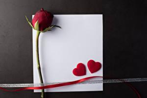 Hintergrundbilder Valentinstag Rose Vorlage Grußkarte Blatt Papier Dunkelrote Herz Band Grauer Hintergrund Blüte