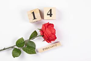 Hintergrundbilder Valentinstag Rose Weißer hintergrund Englischer Text Rot Blüte