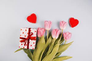 Bilder Valentinstag Tulpen Grauer Hintergrund Rosa Farbe Geschenke Herz Blüte