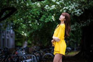 Images Asian Bokeh Pose Dress Hands Brown haired female