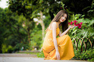 Image Asiatic Blurred background Posing Sit Frock Hands Brown haired Lovely young woman
