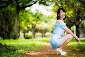 Bilder Asiatische Bokeh Pose Sitzen Kleid Lächeln Braunhaarige Mädchens