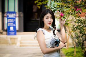 Wallpaper Asiatic Branches Dress Hands Brunette girl Glance female