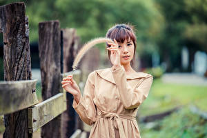 Images Asiatic Feathers Blurred background Posing Hands Brown haired Staring young woman