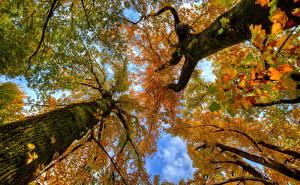 Fotos Herbst Baumstamm Untersicht Ansicht von unten Ast