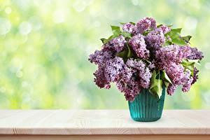 Wallpaper Bouquet Syringa Vase flower
