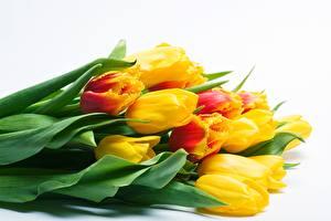 Desktop hintergrundbilder Blumensträuße Tulpen Weißer hintergrund Gelb Blüte