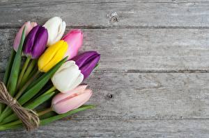 Bilder Sträuße Tulpen Bretter Bunte Vorlage Grußkarte