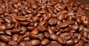 Bakgrundsbilder på skrivbordet Kaffe Många Närbild Korn (Säd) Brun Mat