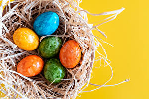 Wallpapers Easter Colored background Nest Egg Multicolor Food
