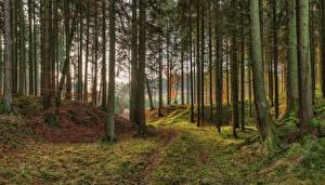 Desktop hintergrundbilder Deutschland Parks Herbst Bayern Bäume Laubmoose Natur