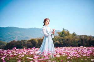Bilder Grünland Asiaten Kleid Braune Haare junge frau