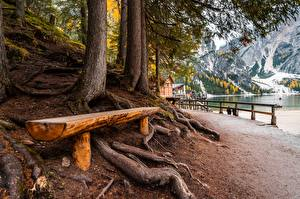 Picture Italy Bench Trees Lake Braies Nature