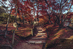 Desktop wallpapers Japan Parks Autumn Trees Leaf Staircase Shukkeien Garden Hiroshima Nature