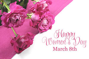 Photo International Women's Day Rose White background English Lettering Pink color flower