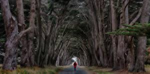 Fondos de Pantalla Carreteras árboles Paseo Naturaleza imágenes