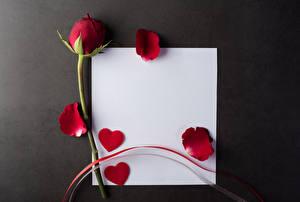 Hintergrundbilder Rosen Grauer Hintergrund Vorlage Grußkarte Blatt Papier Kronblätter Herz Rot Blumen