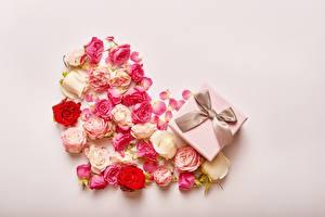 Fotos Rose Valentinstag Herz Schleife Schachtel Geschenke Blütenknospe