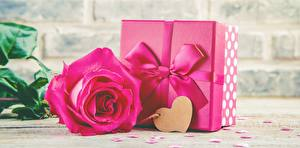 Pictures Rose Valentine's Day Pink color Present Bow knot Heart flower